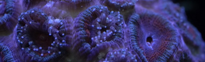 Requiem for Corals